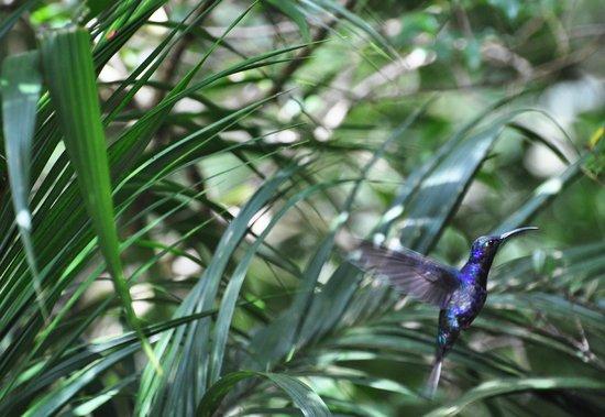 Johnny Loves Nature : Hummingbird