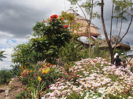 Ben Abeba: Garden In Bloom