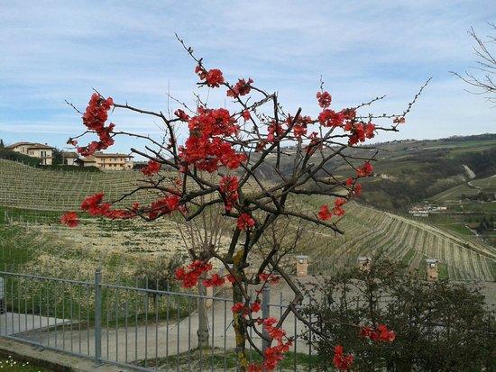 Cascina Schiavenza : primavera