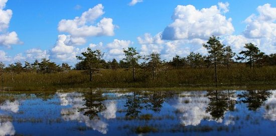 Everglades City, Φλόριντα: A day on the grass
