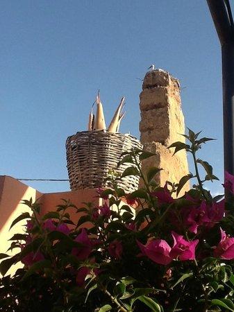 Maison Arabo Andalouse: Nearby storks