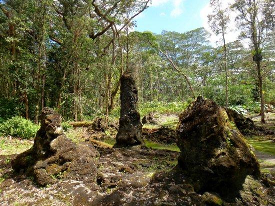 Lava Tree State Park: Interesting lava/tree mold formations