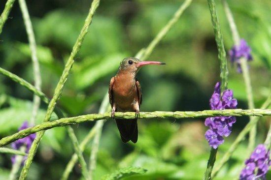 Hotel Cerro Lodge: colibri in the garden