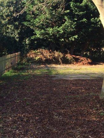 3 Tuns Coaching Inn: Garden waste dumped and rotting..