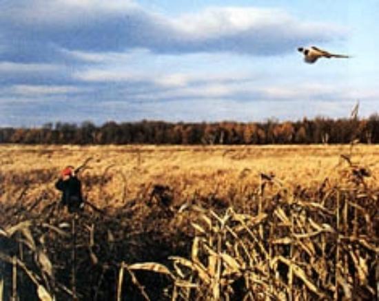 Mecan River Inn: Pheasant Hunting