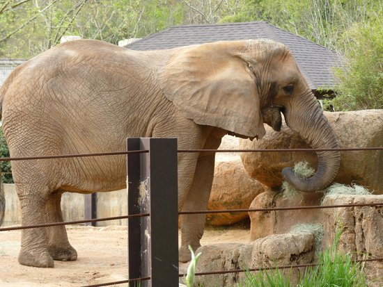Elephant Picture Of Riverbanks Zoo And Botanical Garden Columbia Tripadvisor