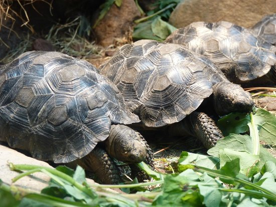 Tortise Picture Of Riverbanks Zoo And Botanical Garden Columbia Tripadvisor