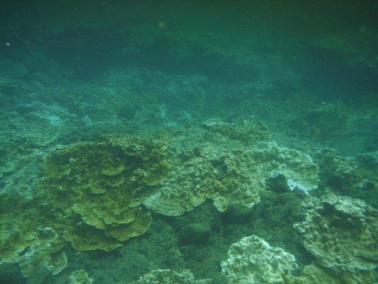 Kapoho Tide Pools: Coral
