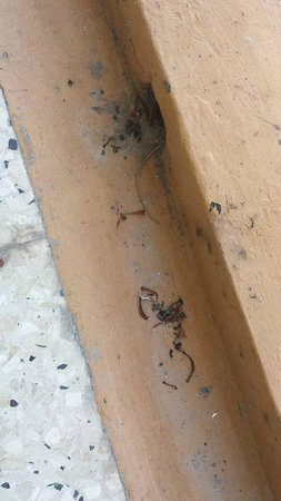 Carib-Ocho Rios : More infestation of random bugs at balcony door & lack of cleaning