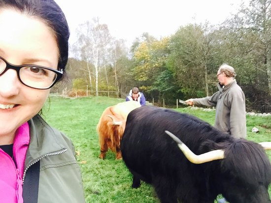 Great Glen Bed and Breakfast: Brushing the cows!