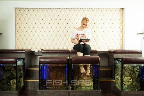 Fish manicure 6 fish spa novi sad resmi tripadvisor for Fish pedicure dc