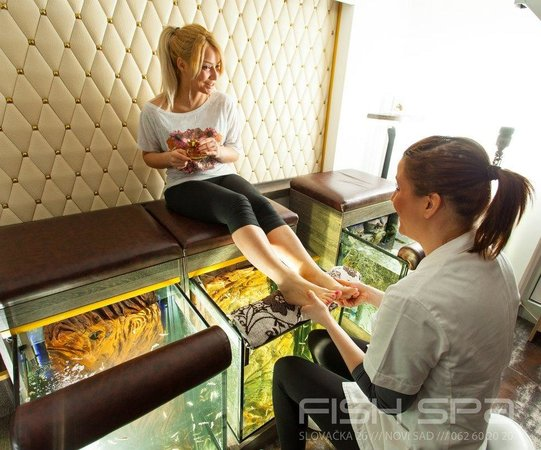 Relax massage 15 60min bild von fish spa novi sad for Fish pedicure dc