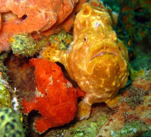 Dive Grenada