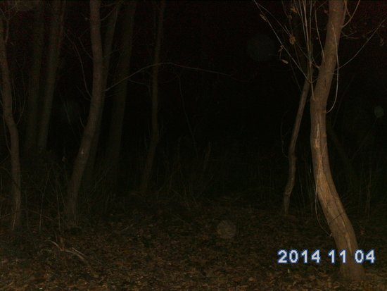 After Dark Investigations: Tons of Orbs