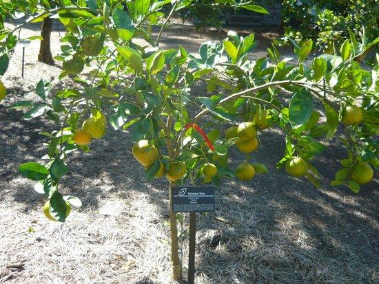 Merveilleux Harry P. Leu Gardens: Leu Gardens   Citrus Garden