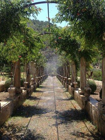 Jardines d 39 alfabia jardins de alfabia for Jardines alfabia