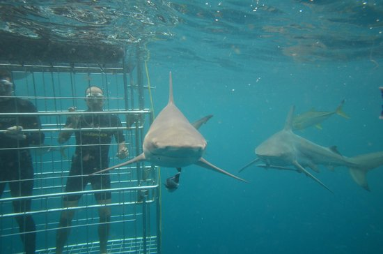 Shark Cage Diving KZN: My 1st open water shark cage dive :-)