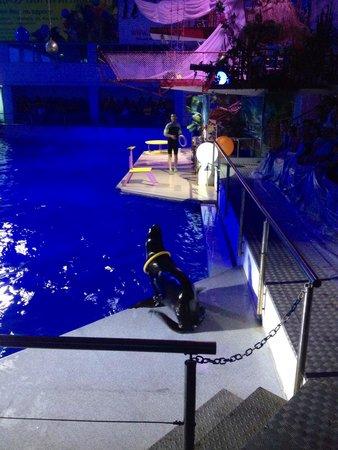 Dolphinarium Naberezhnye Chelny