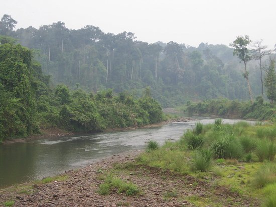 Tinsukia, อินเดีย: River flowing through the Dehing Patkai wildlife sanctuary