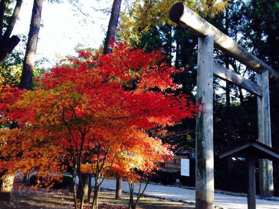 Misogi Shrine : 紅葉と鳥居。 11/3に行きました。夕方だったため、風が冷たく、秋を感じました。 敷地はとても広く、能舞台があらました。歌手のゆずがコンサートを行うようです。 なによりも紅葉の色がとても良かっ