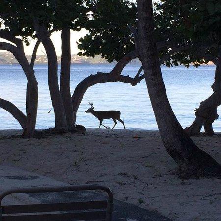 Caneel Bay Resort : Early morning on Scott Beach