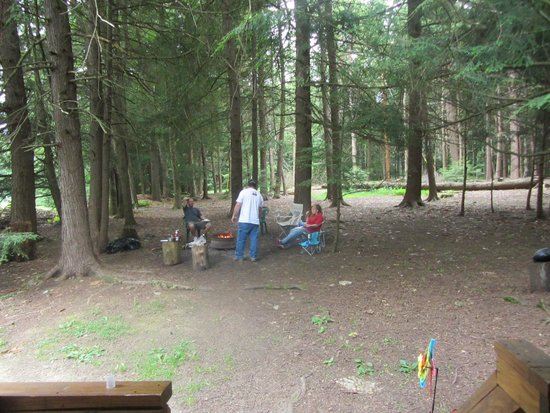 Hominy Ridge Lodge and Cabins : Fire area surrounded by tall trees, nice shelter from rain
