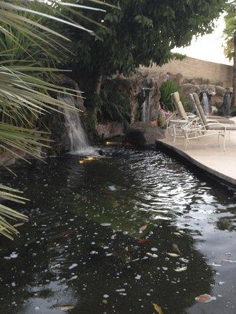 Sacramento Marriott Rancho Cordova: Koi Pond