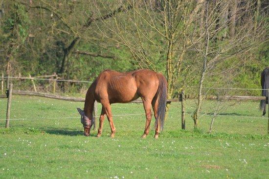 Parque de Monza: cavallo  maneggio  parco di monza