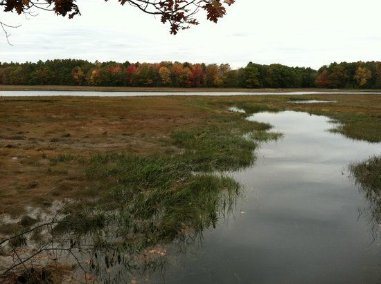 Kennebunks, ME: View over the marshlands
