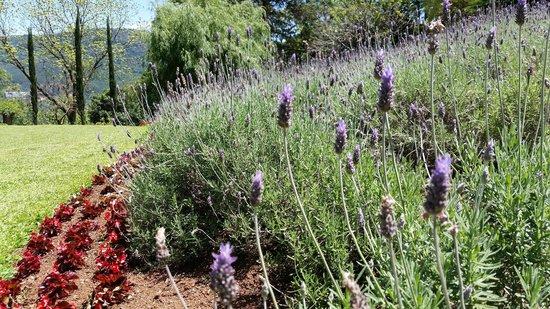 Lavanda picture of le jardin parque de lavanda gramado for Jardines de lavanda