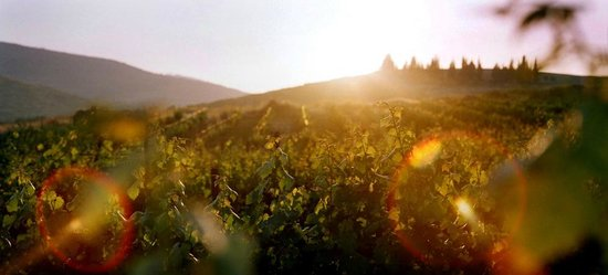 West Bank, ดินแดนปาเลสไตน์: Vineyards