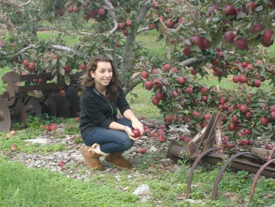 Lawrence Farms Orchards: Picturesque