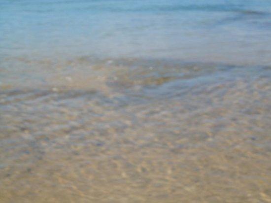 Ilha do Rodeador : Água limpida