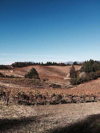 Schweiger Vineyards: the entrance of the Vinyard