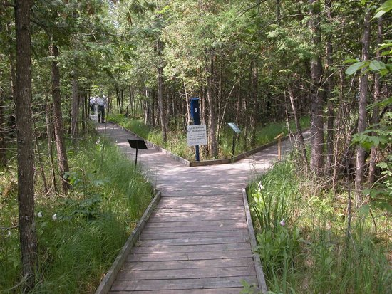 Lanark, Kanada: Boardwalk to view orchids