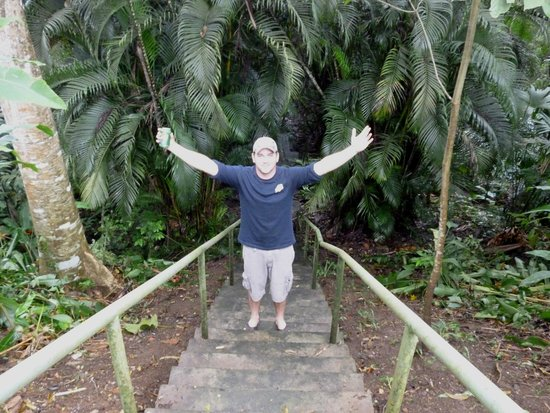 Albrook Inn: stairs go into a small jungle