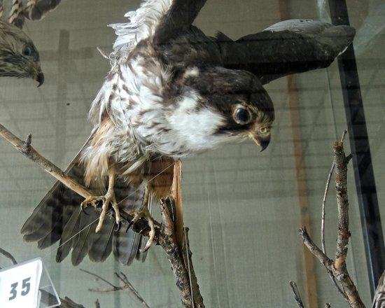 Silistra Province, Bulgarien: экспонат музея