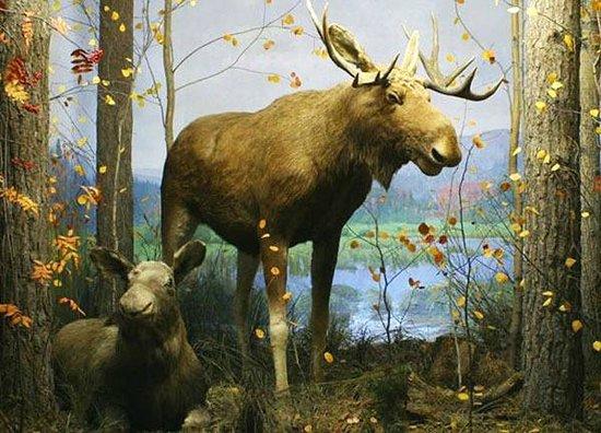 Картинки природы екатеринбург