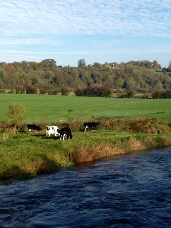 Day Tours Unplugged : Cows grazing on the River Boyne