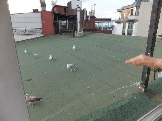 Sevila Hotel: Feeding seagulls from roof terrace