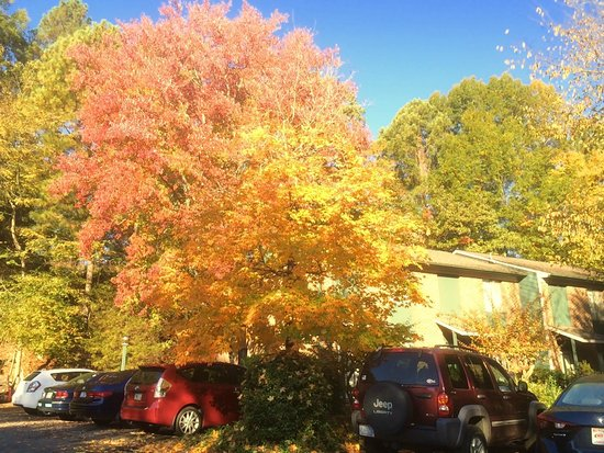 Chapel Hill InnTown: Autumn hues from outside hotel