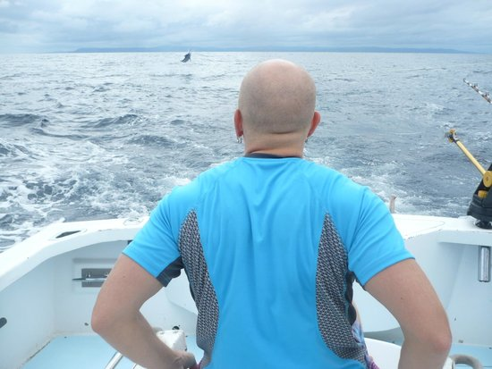 Coiba Adventure Sport Fishing: Getting ready for some action, Black Marlin just bit on the bait.