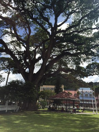 Derek Walcott Square: The noted Tree - reputed to be 400 years old