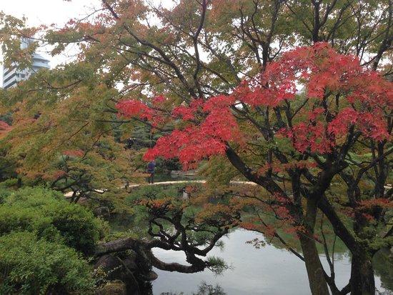 Sorakuen Garden: 紅葉が見事