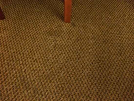 Rodeway Inn and Suites: Stained Rugs