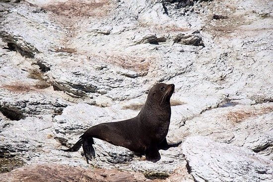 Colonia de focas: Seal @spoiltbytes