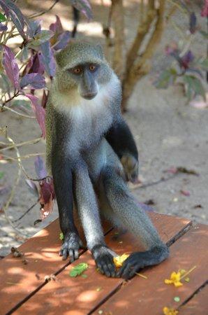 Kizimkazi, Tanzania: un petit visiteur dans notre villa