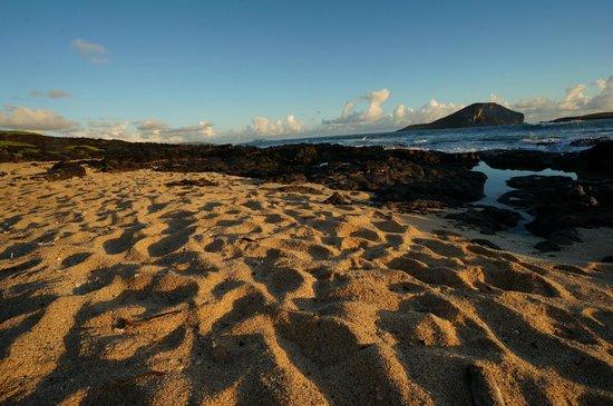 Blue Hawaii Photo Tours: Sun Kissed Sands