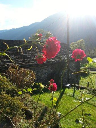 Hotel Casa Martinelli: letzte blühende Rosen im Novemer...