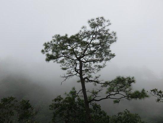Ecopark El Manzano